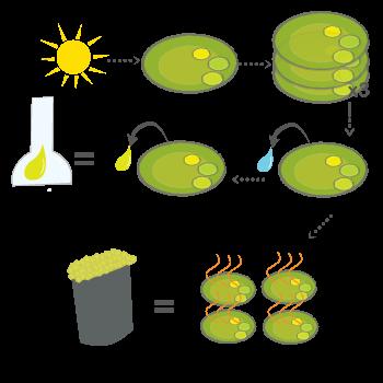 Backgrounds 1569283440 biofuel a3 72dpi