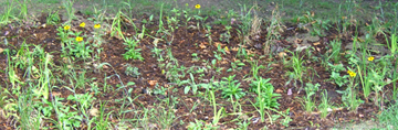 Backgrounds 1423864253 rain garden close