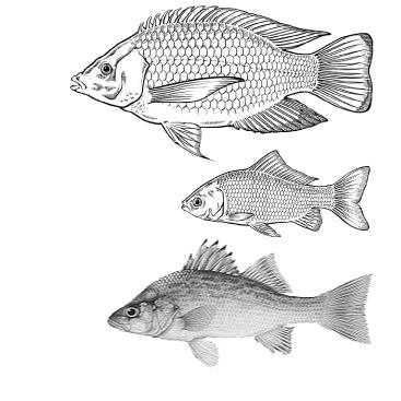Backgrounds 1423865653 next graphic journey aquaponics fish