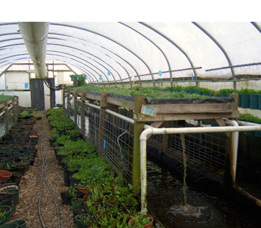 Backgrounds 1423865664 next graphic journey aquaponics growingpower resize