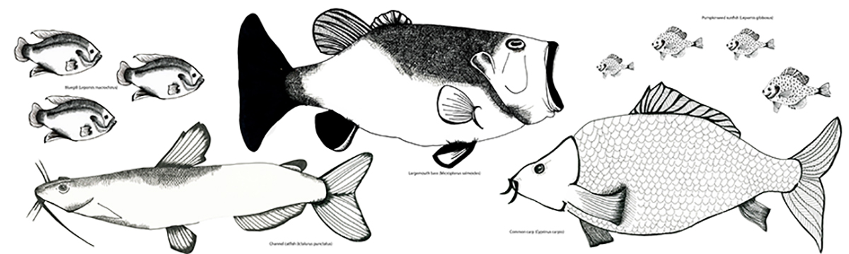 Images 1519130367 fish%28freshwater%29 a 3