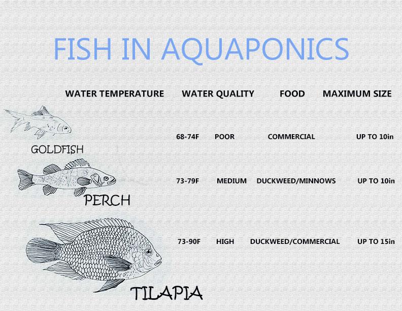 Images 1423865655 aquaponics a2 krueger3