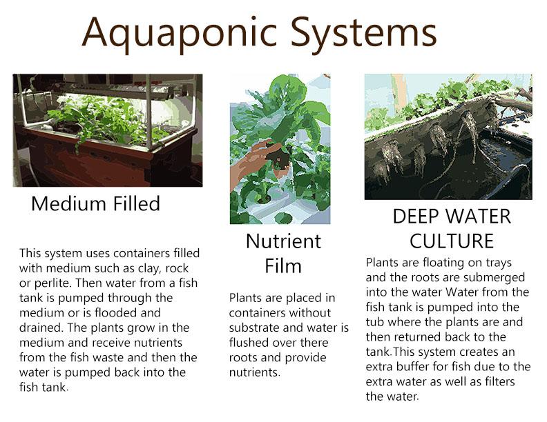 Images 1423865667 aquaponics a2 krueger