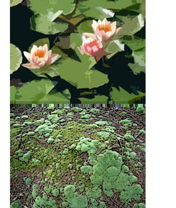 Description backgrounds 1423859969 plants intro