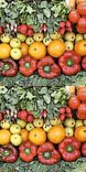 Icons 1423863960 growingvegetables icondb