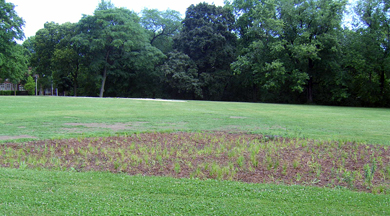 Description backgrounds 1423864239 rain garden far