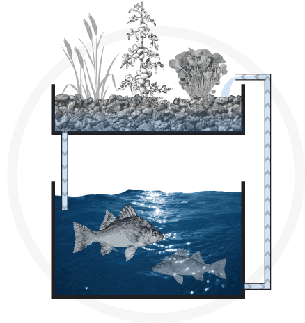 Description backgrounds 1423865651 next graphic journey aquaponics system diagram