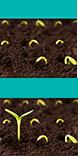 Icons 1490307865 seeds icondb